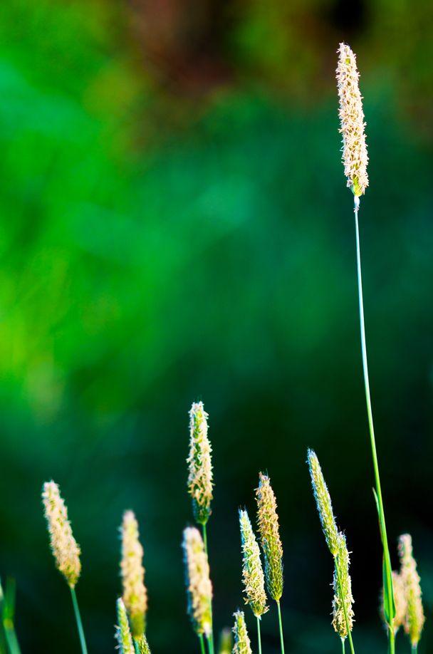 Grasses100Manfrotto