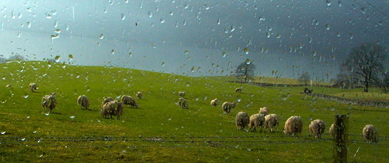 Raindrops150Manfrotto