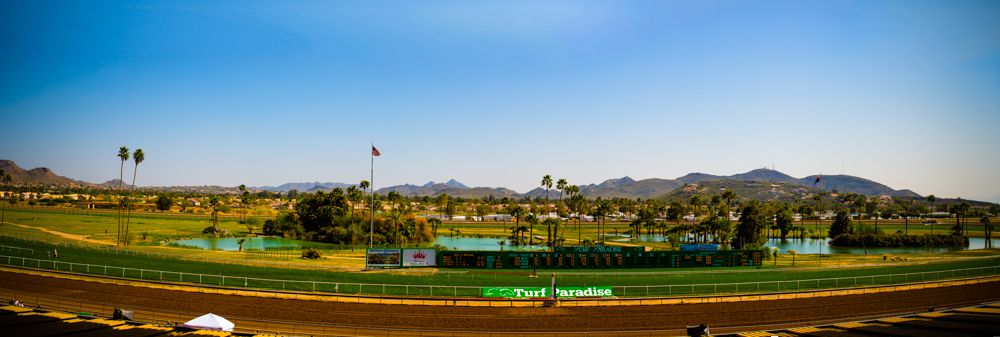 Turf Paradise Camel and Ostrich Races 23 March 2013 - 16