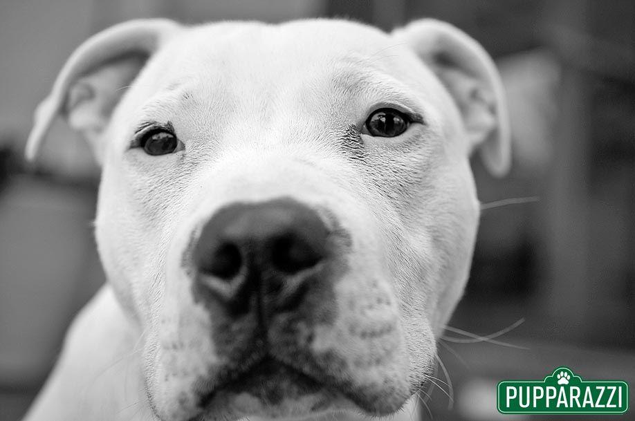 pet photography melbourne-15 (1)