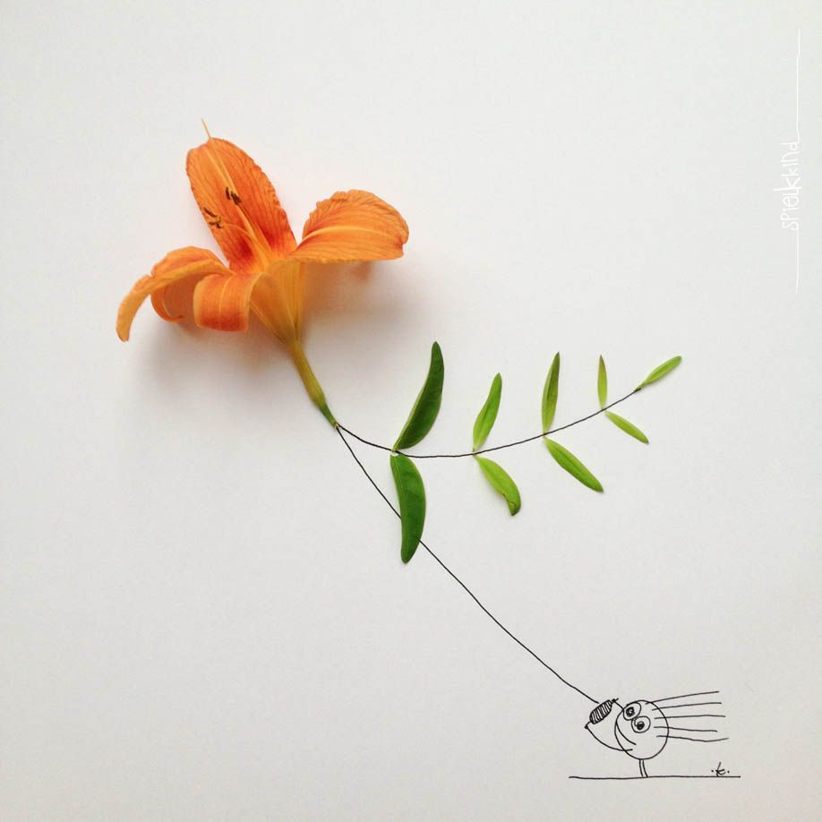 kite lily