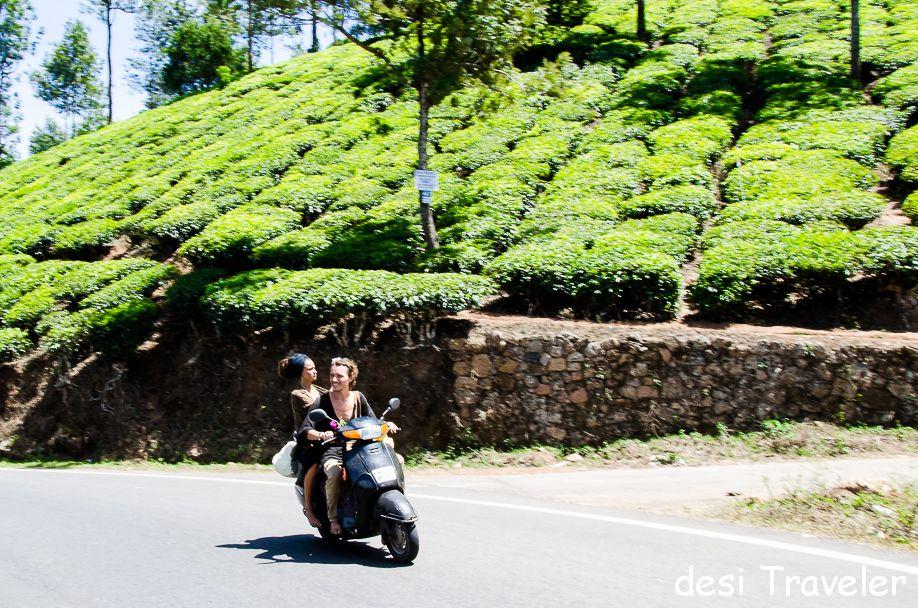 7 Kerala Experiences- Visit Tea Garden in Munnar
