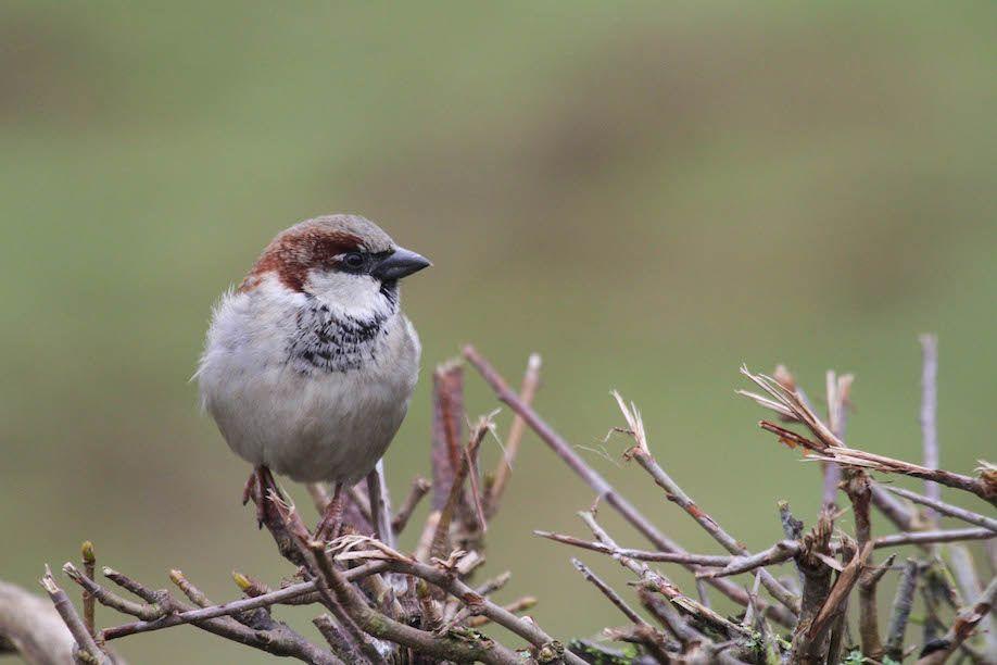 06_sparrow-7545