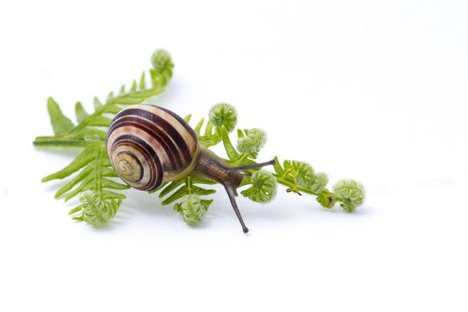 06_snail