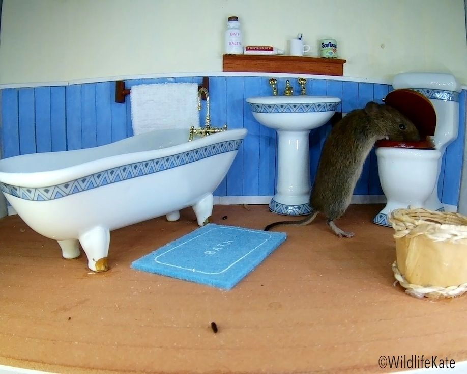 39_Bathroom Vole toilet peanut_00005