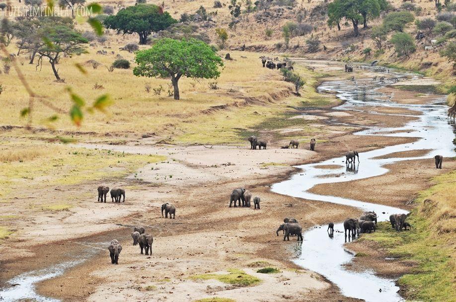 MIM_luziapimpinella_TravelPhotography_Tansania_Safari_Photo1
