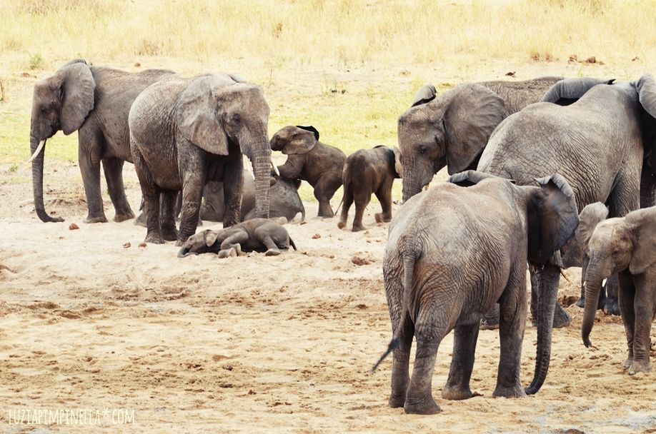 MIM_luziapimpinella_TravelPhotography_Tansania_Safari_Photo2