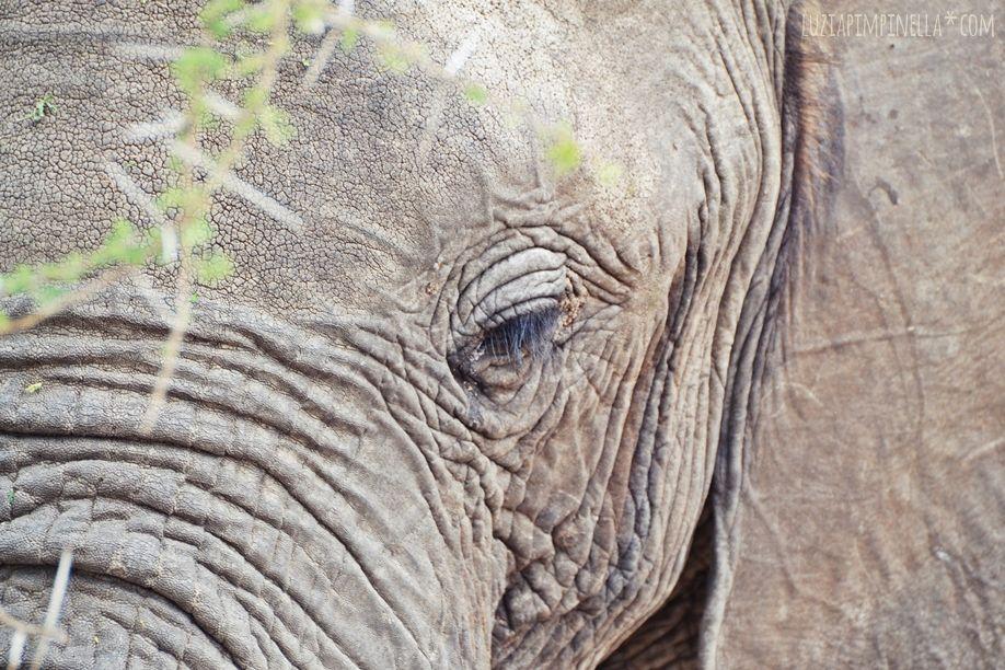 MIM_luziapimpinella_TravelPhotography_Tansania_Safari_Photo3