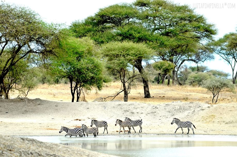 MIM_luziapimpinella_TravelPhotography_Tansania_Safari_Photo4