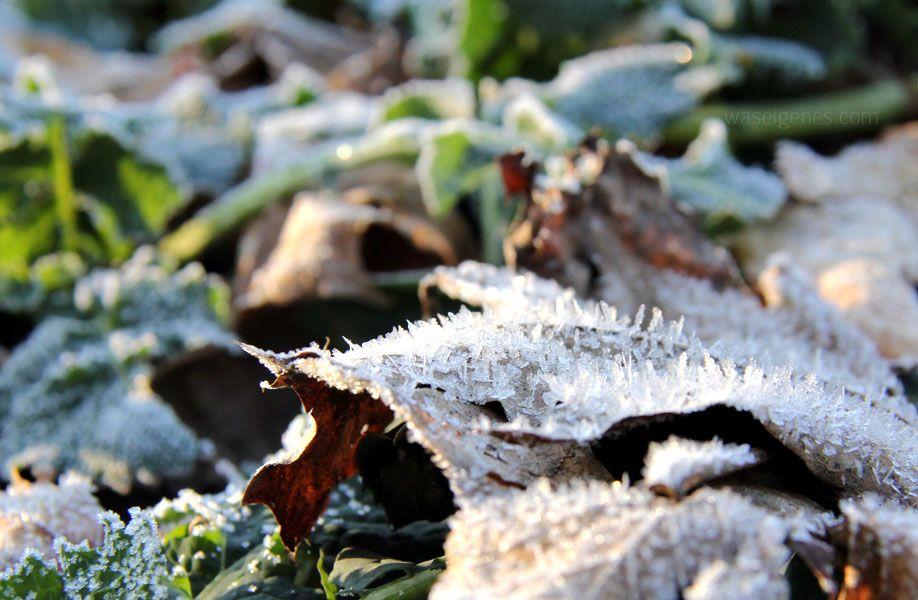 manfrotto winter was eigenes 3