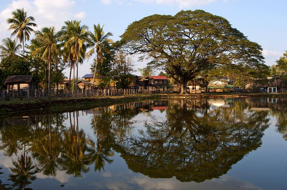 Photos of reflections something different for your for Lago per tartarughe