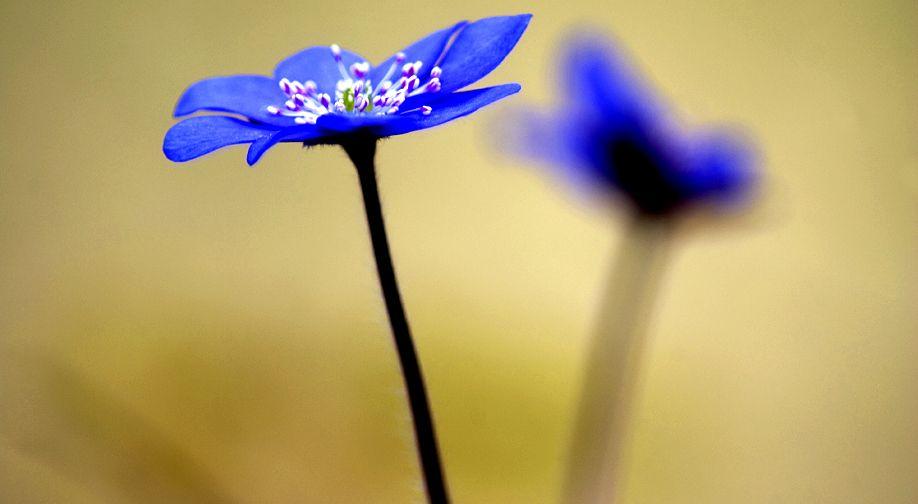 spring-macro