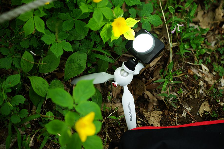 Manfrotto LED light LUMIE