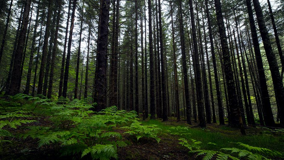 Isterdalen_Wald