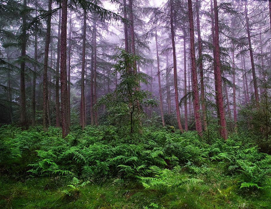 霧の中の木々