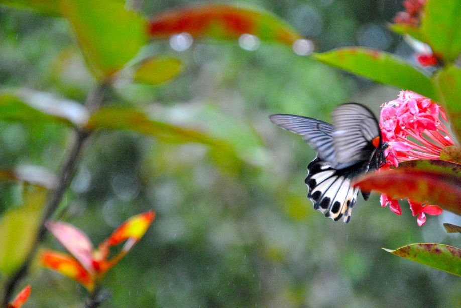 butterfly-rain-hue1