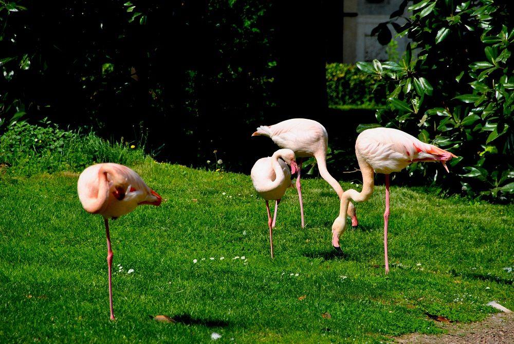 flamingos_quadrilateral_silence_milan1