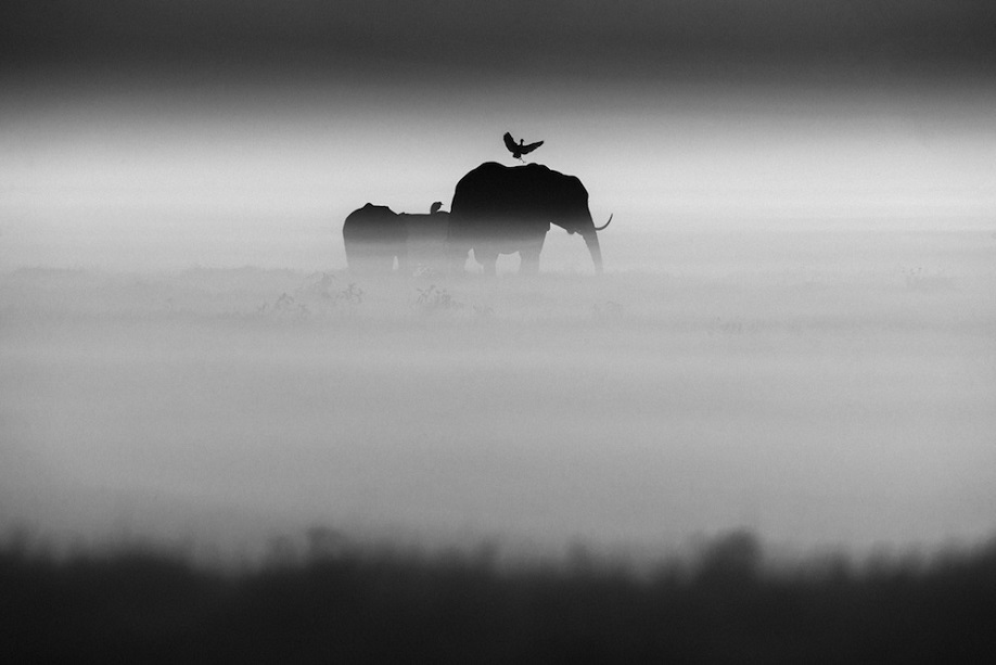 1532-Elephants and bird, Kenya 2015 © Laurent Baheux