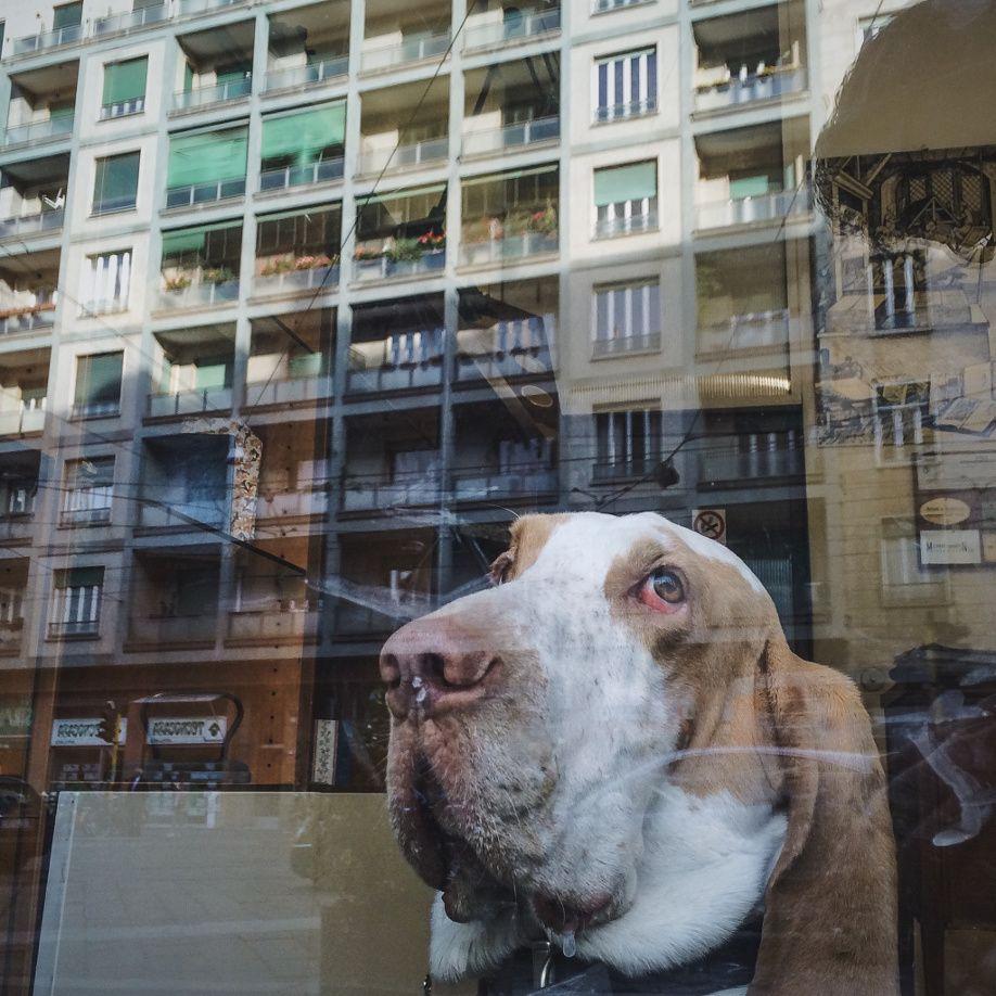 dog-window