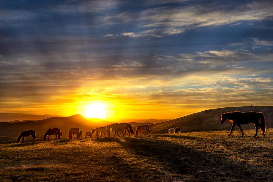 Horse-Sunset-NOMADasaurus