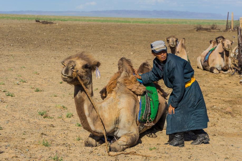 Nomad-Camel