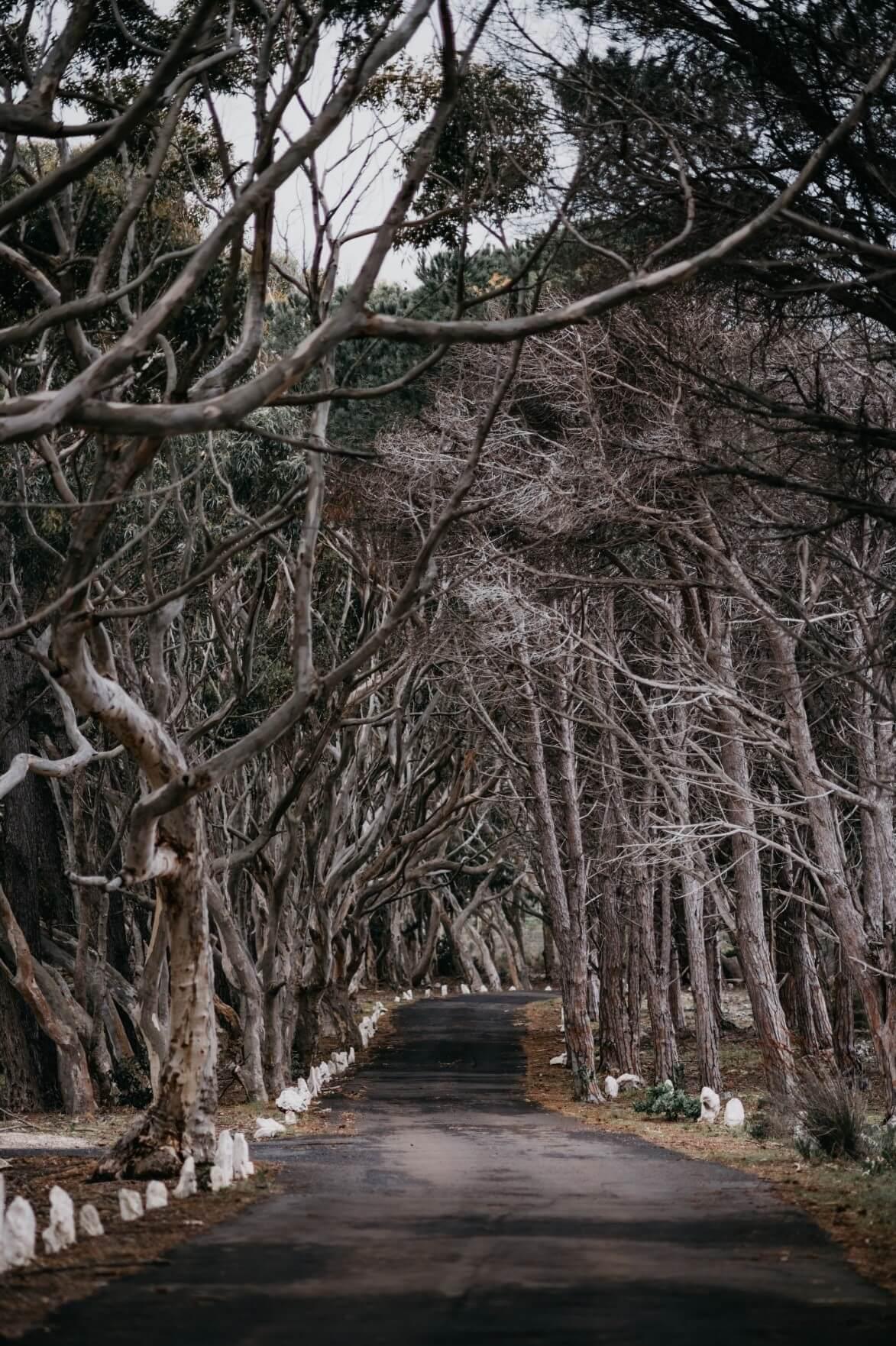 Diese wunderschöne Straße kann in der Nähe der Eland und Duiker Hütten gefunden werden.