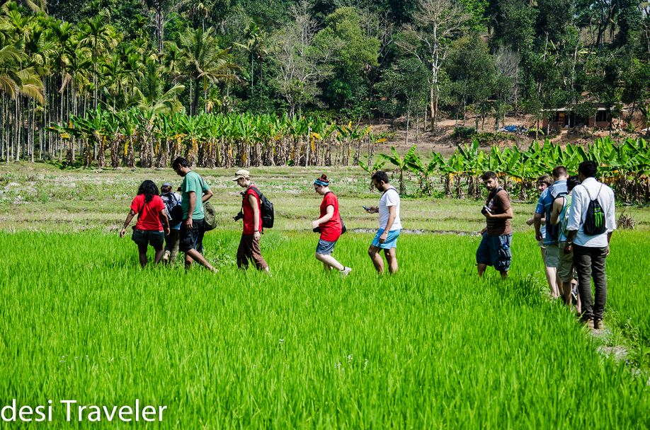 Plantation in Kerala