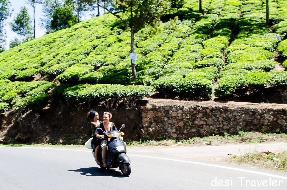 Tea Gaden in Munnar