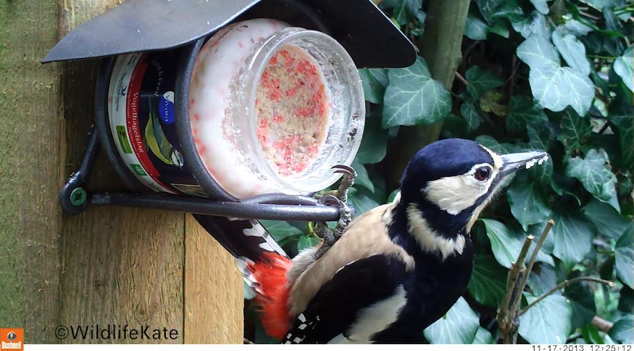 15_WildlifeKate Bushnell Woodpecker