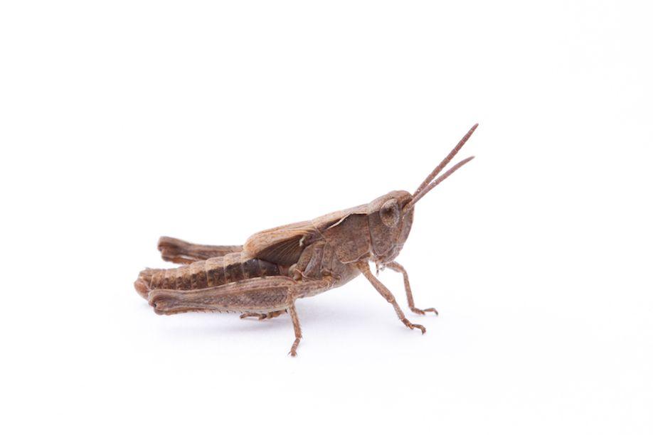 026_Grasshopper-7384
