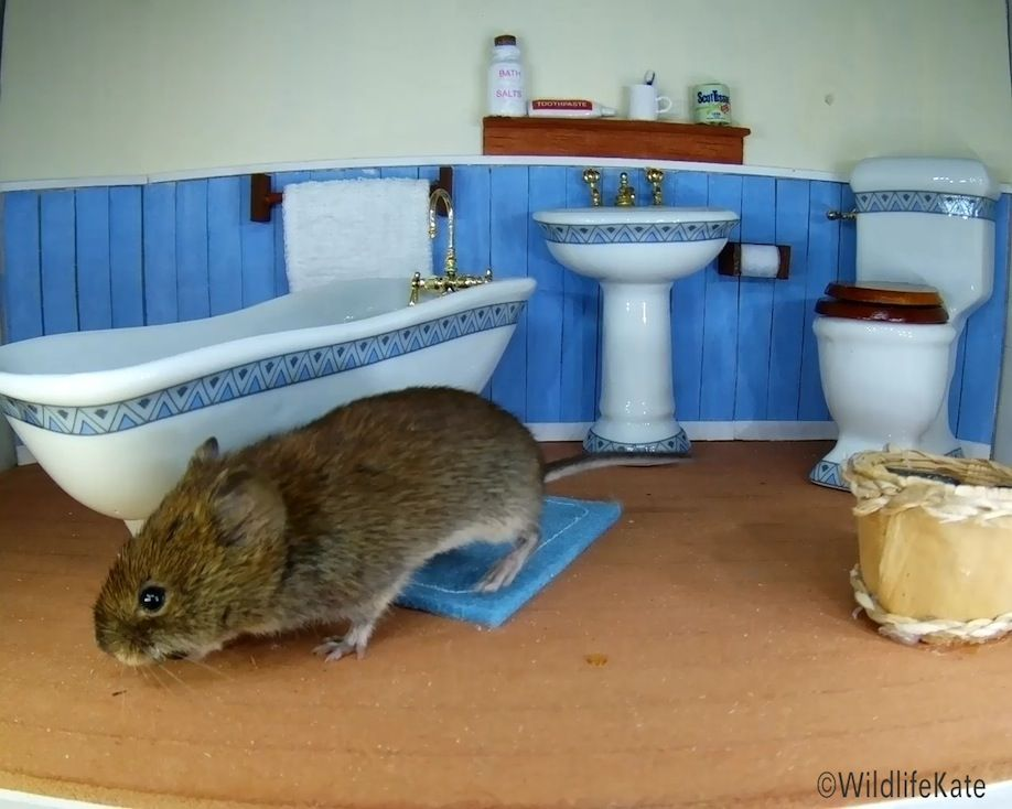 36_Bathroom Vole 1_00006