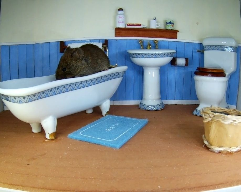 37_Bathroom Vole 2_00000
