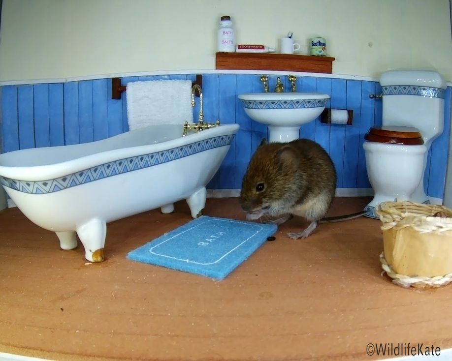 38_Bathroom Vole facewash_00001