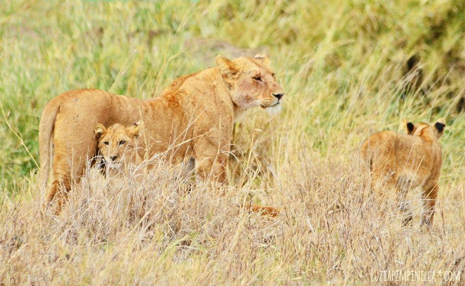 MIM_luziapimpinella_TravelPhotography_Tansania_Safari_Photo6