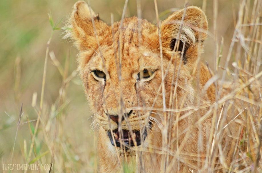 MIM_luziapimpinella_TravelPhotography_Tansania_Safari_Photo7