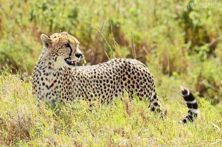 MIM_luziapimpinella_TravelPhotography_Tansania_Safari_Photo8