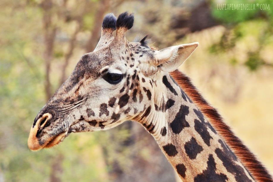 MIM_luziapimpinella_TravelPhotography_Tansania_Safari_Photo9