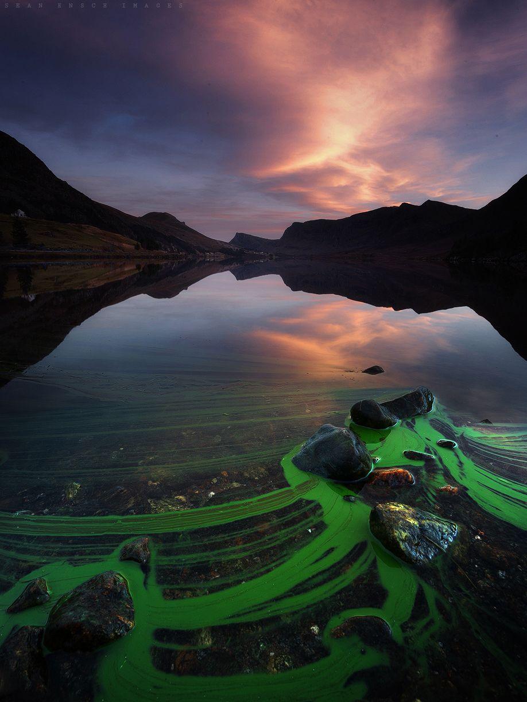 algae_rocks