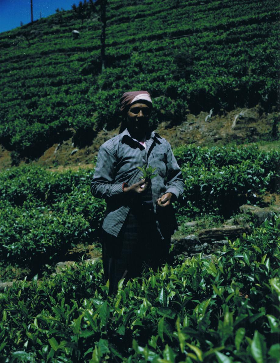 Sri Lanka - Mamiya Universal & Polaroid back - Fuji FP100C film - ©jaimelemonde.fr - Haputale - Tea gatherer