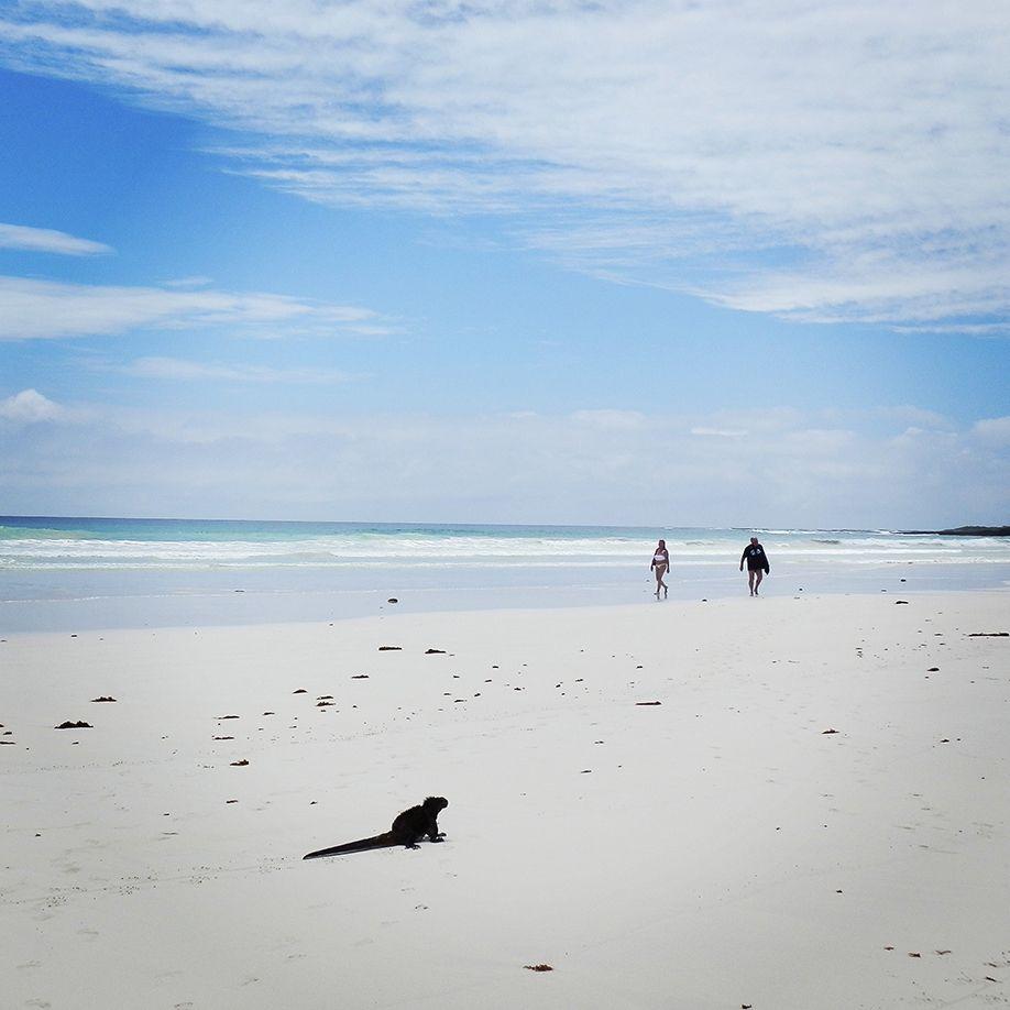 iguana-beach-galapagos