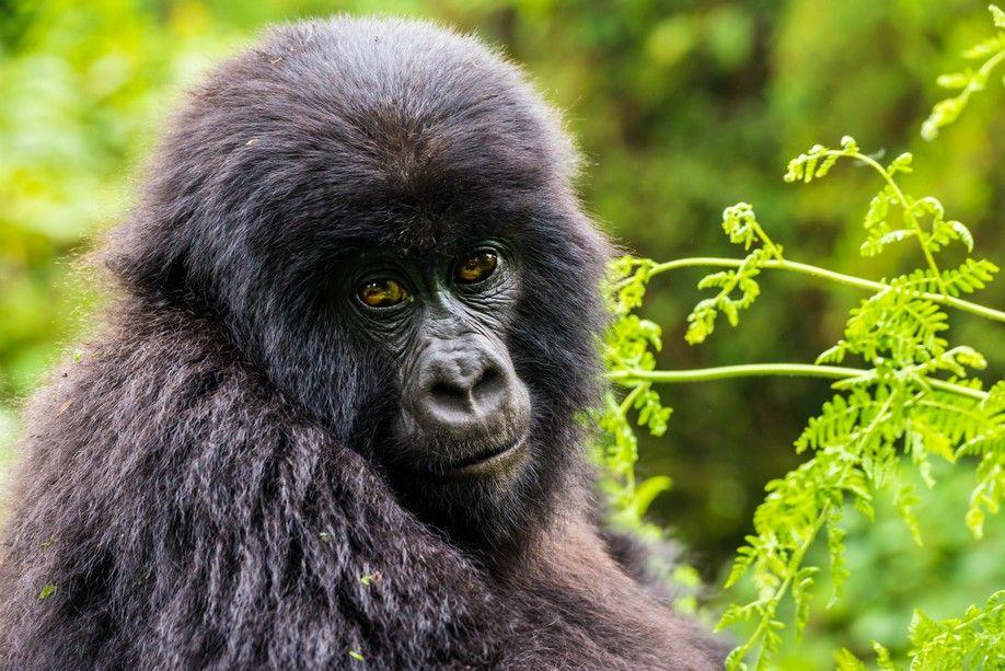 Iain_Mallory_Rwanda-9721