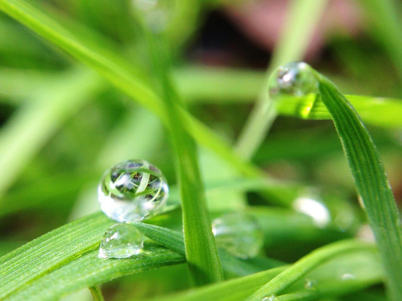 Macro-Dew