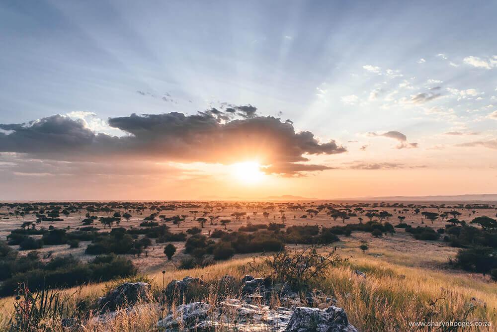 Serengeti Journey Manfrotto Imagine More